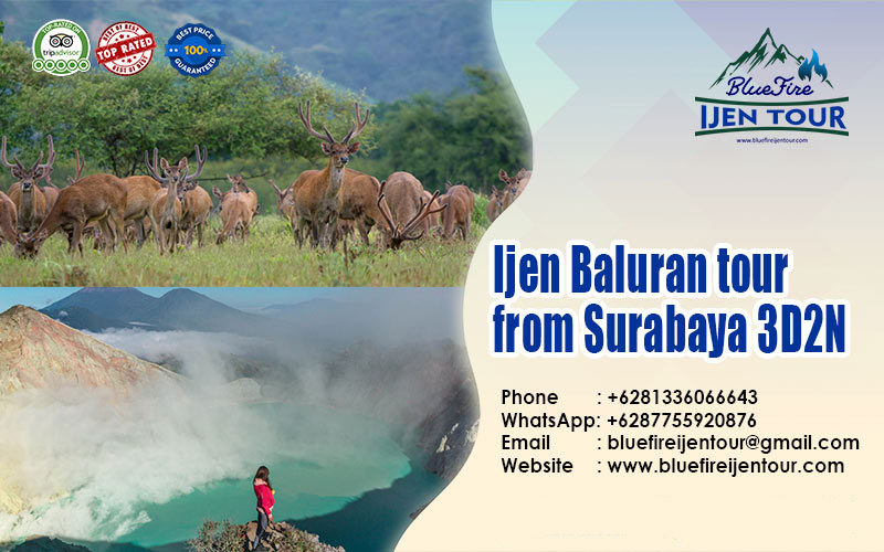 Ijen Baluran tour package from Surabaya 3D2N