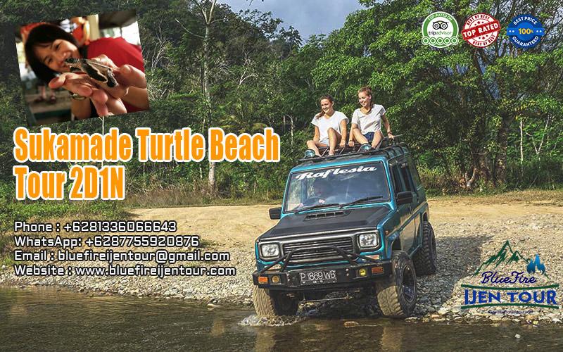 Sukamade turtle beach tour 2D1N, Sukamade Beach Tour